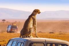 south-africa-tourism